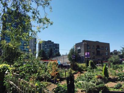 A Community garden in Downtown Vancouver