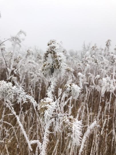 Frosty Poland