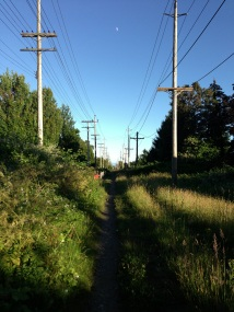 Vancouver's many green spaces